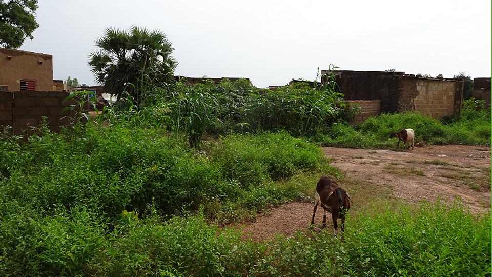BOASSA-agriculture
